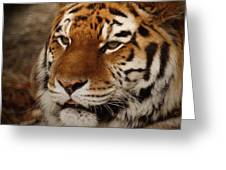 Amur Tiger Greeting Card by Ernie Echols