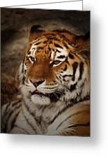 Amur Tiger Greeting Card by Ernie Echols