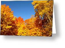 An Autumn of Gold Greeting Card by Danielle  Broussard