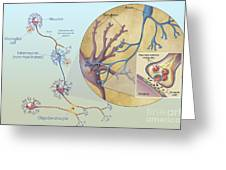 Anatomy Of Neurons Greeting Card by Carlyn Iverson