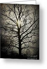 Ancient Tree Greeting Card by Terry Rowe