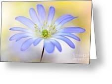 Anemone Blanda Greeting Card by Jacky Parker