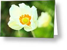 Anemone Greeting Card by Cathie Tyler