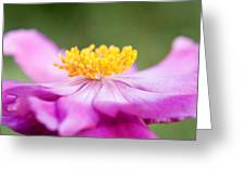 Anemone Flower Close Up Greeting Card by Natalie Kinnear