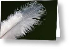 Angel Feather Greeting Card by Carol Lynch