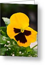 Angel Winged Pansy Greeting Card by Maria Urso