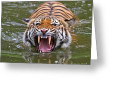 Angry Tiger Greeting Card by Louise Heusinkveld