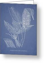 Anisogonium Lineolatum Greeting Card by Aged Pixel