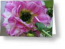 Another Point Of View Greeting Card by Jeanette C Landstrom