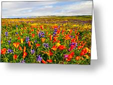 Antelope Valley California Poppy Reserve Greeting Card by  Bob and Nadine Johnston