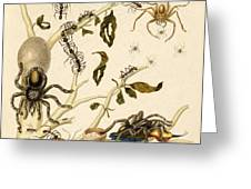 Ants Spiders Tarantula and Hummingbird Greeting Card by Getty Research Institute