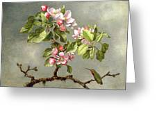 Apple Blossoms And A Hummingbird Greeting Card by Martin Johnson Heade