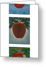 Apples Triptych 2 Greeting Card by Don Young