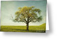 Appletree Greeting Card by Priska Wettstein