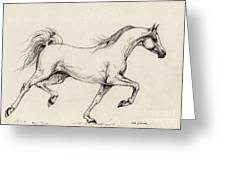 Arabian Horse Drawing 31 Greeting Card by Angel  Tarantella