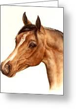 Arabian Horse Head Study Greeting Card by Julia Sweda