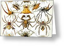 Arachnida Greeting Card by Nomad Art And  Design