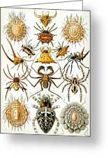 Arachnida Greeting Card by Georgia Fowler