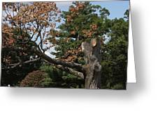 Arlington National Cemetery - 121242 Greeting Card by DC Photographer