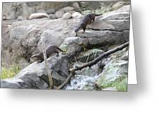 Asian Small Clawed Otter - National Zoo - 01133 Greeting Card by DC Photographer