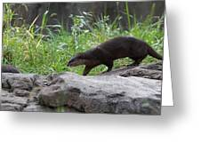 Asian Small Clawed Otter - National Zoo - 01135 Greeting Card by DC Photographer