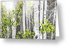 Aspen grove Greeting Card by Elena Elisseeva