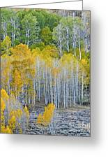 Aspen Stand Greeting Card by L J Oakes