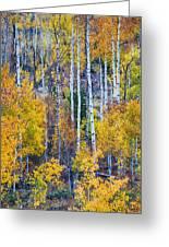 Aspen Tree Magic Cottonwood Pass Greeting Card by James BO  Insogna