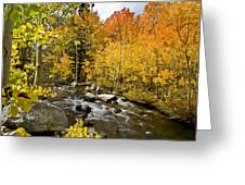 Aspens At Bishop Creek Greeting Card by Cat Connor