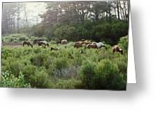 Assateague Herd Greeting Card by Joann Renner