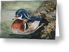 At Rest Greeting Card by Betty-Anne McDonald