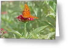 At Rest - Gulf Fritillary Butterfly Greeting Card by Kim Hojnacki