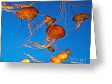 Atlantic Sea Nettle Jellyfish Greeting Card by Tap  On Photo