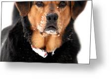 Attentive Labrador Dog Greeting Card by Christina Rollo