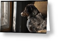 Aussie On Watch Greeting Card by Ron Roberts