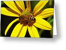 Australian Bee Snacktime Greeting Card by Margaret Saheed
