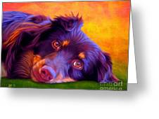 Australian Shepherd Portrait Greeting Card by Iain McDonald