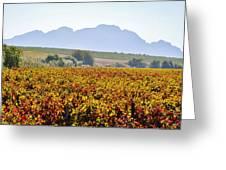 Autum Wine Field Greeting Card by Werner Lehmann