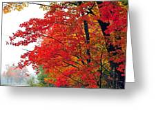 Autumn Along a Country Road Greeting Card by Terri Gostola