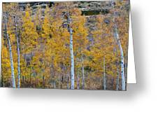 Autumn Aspens Greeting Card by James BO  Insogna