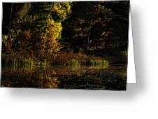 Autumn At It's Finest Greeting Card by Thomas Young