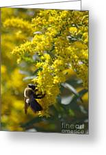 Autumn Bee Greeting Card by Tannis  Baldwin
