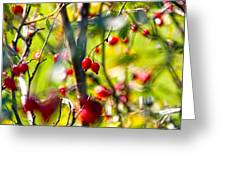 Autumn Berries  Greeting Card by Stylianos Kleanthous