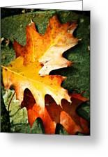 Autumn Blaze Greeting Card by JAMART Photography