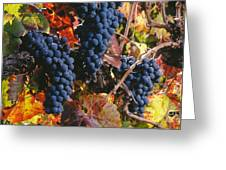 Autumn Cabernet Clusters  Greeting Card by Craig Lovell