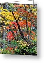 Autumn Color Japan Maples Greeting Card by Robert Jensen