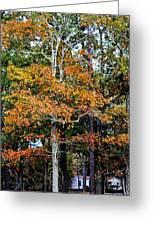 Autumn Colors Greeting Card by Carolyn Ricks