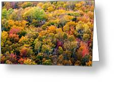 Autumn Colors Greeting Card by Matt Dobson