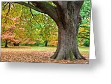 Autumn Greeting Card by Dave Bowman