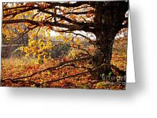Autumn Etude Greeting Card by Igor Baranov